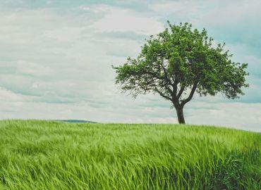 Bäume, das ist im Frühling zu tun