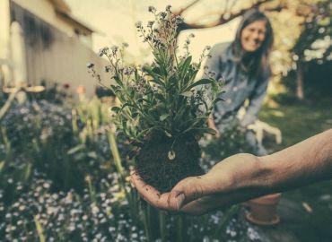 Pflanzen um setzen
